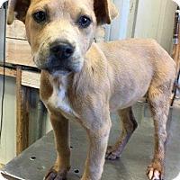 Adopt A Pet :: Remi - Natchitoches, LA