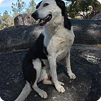 Adopt A Pet :: Molly - Mountain Center, CA