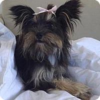 Adopt A Pet :: Cookie (courtesy julia) - Homestead, FL