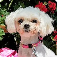 Adopt A Pet :: Bebe - San Diego, CA