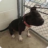 Adopt A Pet :: Wilma - Kirby, TX