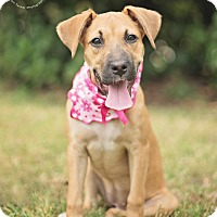 Adopt A Pet :: Scarlett - Kingwood, TX