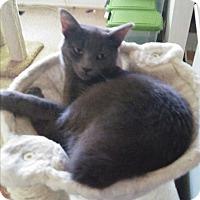 Adopt A Pet :: coutesy posting - wayne, MI