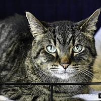 Adopt A Pet :: Wally - St Paul, MN