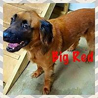 Adopt A Pet :: Red - Kingston, TN