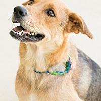 Adopt A Pet :: Keigh - Garner, NC