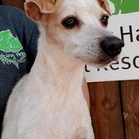 Adopt A Pet :: Freya - Gainesville, FL