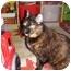 Photo 1 - Domestic Shorthair Cat for adoption in Yorba Linda, California - Bailey
