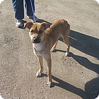 Adopt A Pet :: #014-14  RESCUED! - Zanesville, OH