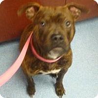 Adopt A Pet :: Debo - Gainesville, FL