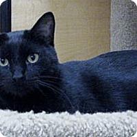 Adopt A Pet :: Furbie & Minnie - Temple, PA
