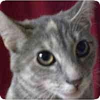 Adopt A Pet :: Dawn - Lombard, IL