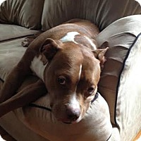 Adopt A Pet :: DumpTruck - Andrew, IA