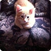Adopt A Pet :: Tucker - Douglas, ON