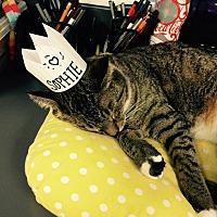 Adopt A Pet :: Sofie - New York, NY