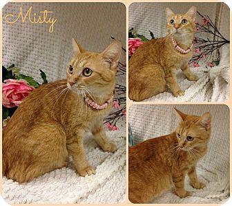 Domestic Shorthair Cat for adoption in Joliet, Illinois - Misty