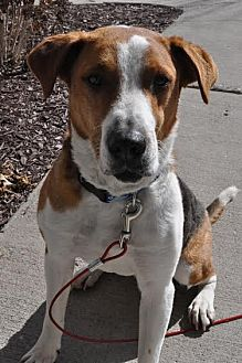 Terrier (Unknown Type, Medium) Mix Dog for adoption in Brooklyn Center, Minnesota - Rocky 17