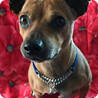 Adopt A Pet :: Homer - Santa Monica, CA