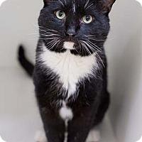 Adopt A Pet :: Marthi - Merrifield, VA