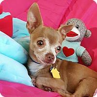 Adopt A Pet :: Traveler - AUSTIN, TX