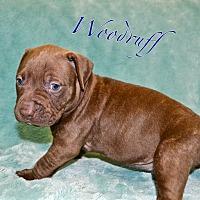 Adopt A Pet :: Woodruff - Tempe, AZ