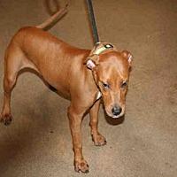 Adopt A Pet :: SUNNY - Aurora, IL