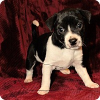 Adopt A Pet :: Tipper - Little Rock, AR