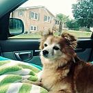 Adopt A Pet :: Vada