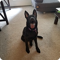Adopt A Pet :: Luna (COURTESY POST) - Baltimore, MD