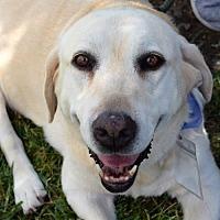 Adopt A Pet :: Myrtle - San Diego, CA
