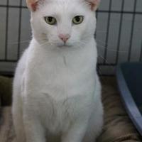 Adopt A Pet :: Casper *FIV+* - Bradenton, FL
