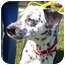Photo 1 - Dalmatian Mix Dog for adoption in Alpena, Michigan - Ace