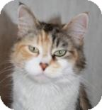 Domestic Mediumhair Cat for adoption in West Des Moines, Iowa - Penny