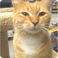 Adopt A Pet :: Ginger Snap - Mesa, AZ