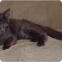 Adopt A Pet :: Rogue - Davis, CA