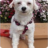 Adopt A Pet :: Mystic-NJ - Mays Landing, NJ