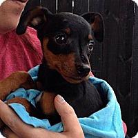 Adopt A Pet :: Tonka - Memphis, TN