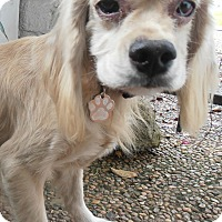 Adopt A Pet :: JJ - Sugarland, TX
