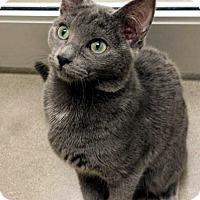 Adopt A Pet :: Buttercup - Edmond, OK
