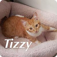 Adopt A Pet :: Tizzy - Bentonville, AR