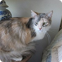 Adopt A Pet :: Puff - San Ramon, CA