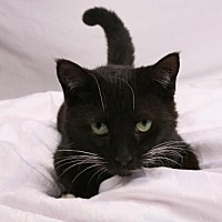 Adopt A Pet :: Tink - Elizabethtown, PA