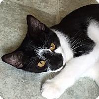 Adopt A Pet :: Finn - Spencer, NY