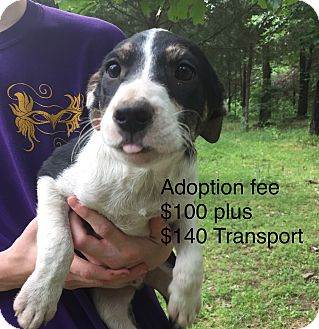 Mixed Breed (Medium) Mix Puppy for adoption in Kittery, Maine - Woods