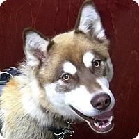 Adopt A Pet :: RUSTY - Adoption Pending - Boise, ID