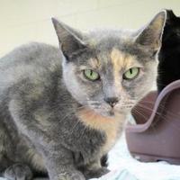 Adopt A Pet :: Eloise Anne - Erie, PA