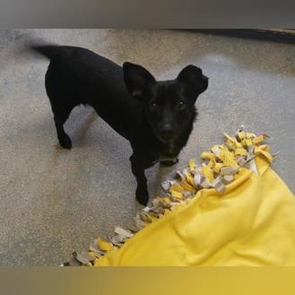 Dachshund Mix Dog for adoption in Camano Island, Washington - Anthony