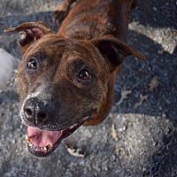 Adopt A Pet :: Roxy - Marietta, GA