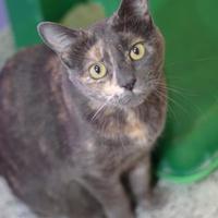 Adopt A Pet :: Lola - Baton Rouge, LA