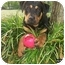 Photo 2 - Rottweiler Dog for adoption in Austin, Texas - Jag